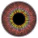 Eye Iris Stock Image
