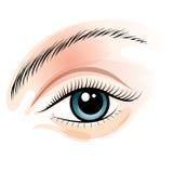 eye kvinnlign Arkivbild