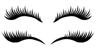 Free Eye Lashes Vector Icon. Vector Stock Photography - 166687242