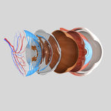 Eye layers Royalty Free Stock Photo