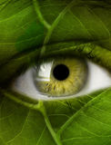 Eye leaf Royalty Free Stock Photos