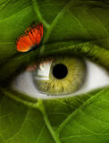 Eye leaf Royalty Free Stock Image
