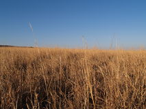 Eye-level view of dry grasslands. Stock Photos