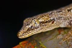 The eye of the lizard. On macro shot Stock Photos