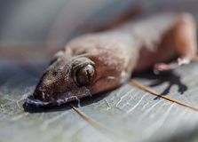 Eye of lizard and head close-up stock images