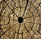 The Eye Of The Log. Royalty Free Stock Photo