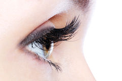 Eye with a long curl false eyelashes Stock Photo