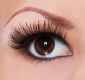 Eye with long eyelashes. Beautiful woman brown eye royalty free stock photo