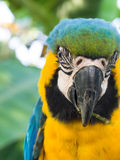 In the Eye of a macaw Royalty Free Stock Photography