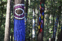 Eye in the magical forest. Painted trees in the Animated Oma Forest, by Agustin Ibarrola. Selective focus Royalty Free Stock Image