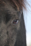 An eye of nice friesian mare Stock Image
