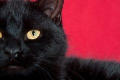 Free Eye Of A Black Cat Stock Photo - 17655710