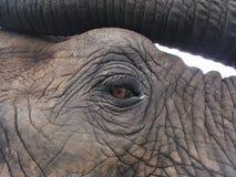 Eye Of The Elephant Royalty Free Stock Images