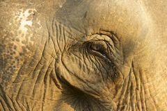 Eye of an old elephant, Luang Prabang, Laos Stock Images