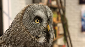 Eye of Owl. Owl symbol of education and knowledge Stock Image