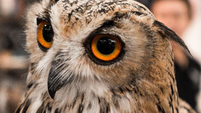 Eye of Owl. Owl symbol of education and knowledge Royalty Free Stock Photo