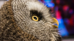 Eye of Owl. Owl symbol of education and knowledge Royalty Free Stock Photography