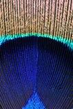 eye påfågeln Arkivbild