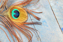 Eye of peacock on blue wood Stock Image