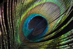 Eye of Peacock Feather. The eye of the Peacock feather, close up Royalty Free Stock Photography