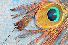 Eye of peacock feather on wood Royalty Free Stock Photography