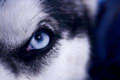 Eye of the Predator stock image