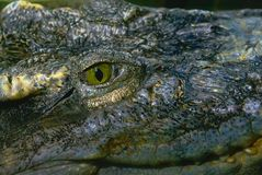 Eye of predator reptile aligator close-up. Bursts of fear and horror stock photography