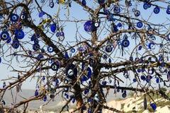 Eye of the prophet tree Royalty Free Stock Photos