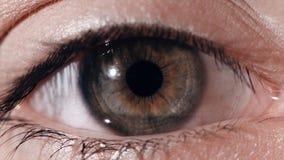 Eye pupil reaction to light. Humans eye macro shot with light-flash apple of eye reaction royalty free stock photos