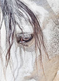 Eye of  purebred  Andalusian white horse closeup Stock Photography