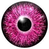 eye purplen Arkivfoto