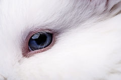 Eye of rabbit Royalty Free Stock Images