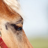 Eye of a red horse. With a light mane against the sky Stock Image