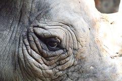 Eye of rhino Royalty Free Stock Photo