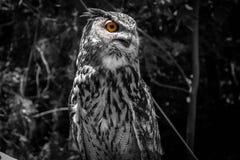 eye see you Στοκ Φωτογραφία