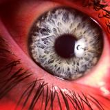Eye See You Royalty Free Stock Image
