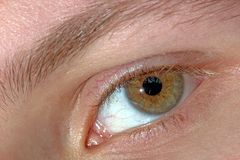 Eye series. Male brown eye Royalty Free Stock Photos