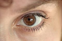 Eye series. Female brown eye Royalty Free Stock Photography