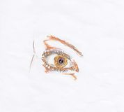 Eye. The eye sketch watercolor pencils Stock Image