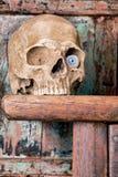 Eye in skull Royalty Free Stock Photos