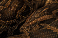 Eye of the snake. Eyes of this snake were shoten an Yerevan zoo Royalty Free Stock Images