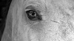 Eye in the soul. The mirror into horse soul Stock Photos