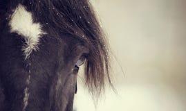 Eye of a sporting horse closeup. Eye of a sporting black horse closeup Royalty Free Stock Photos