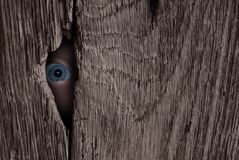 Eye spy Stock Photography