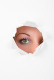 Eye spy curious Stock Images