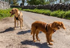 Group of dogs. Eye spy with my little eye something beginning with d royalty free stock images