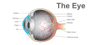 Eye system. vector design. Royalty Free Stock Photo
