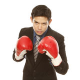 Eye of the Tiger. Man in business attire wearing boxing gloves and in a fighting stance (on white Royalty Free Stock Images