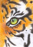 Eye of the tiger. A glimpse of the eye af a tiger, a dive in his interiority Royalty Free Stock Photos