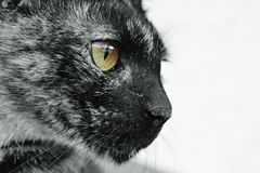 The eye of the tiger. A cat's eye. As simple as that Royalty Free Stock Photo